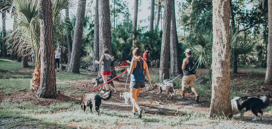 packwalk-2.jpg