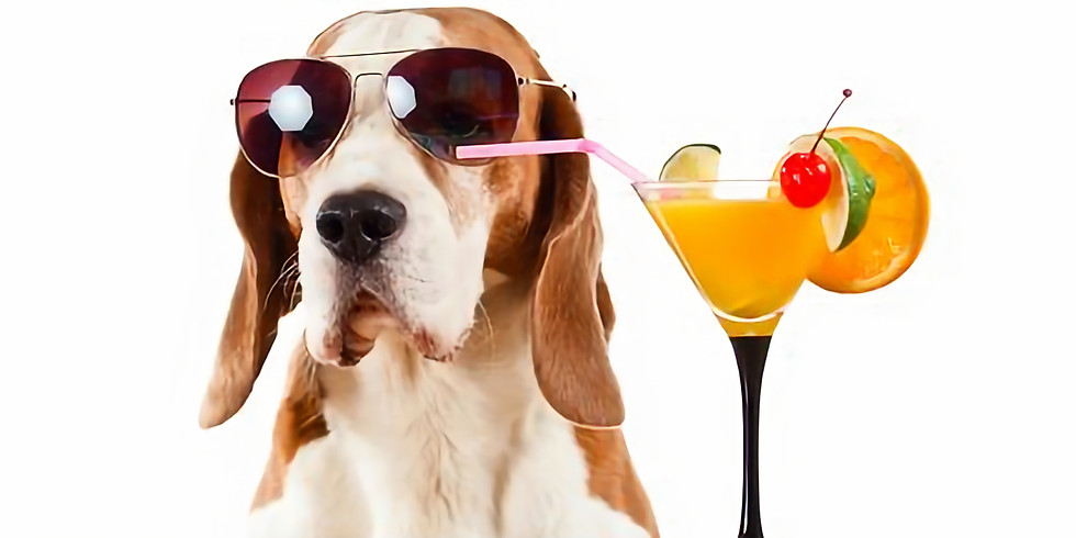 Yappy Hour at Starland Yard