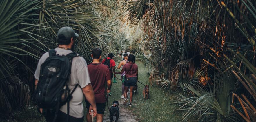 packwalk-13.jpg