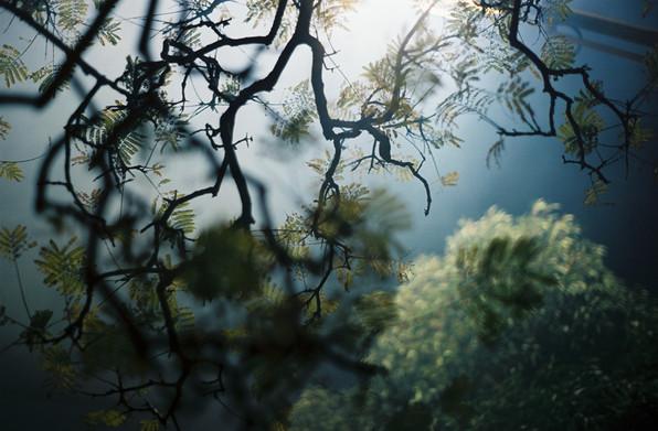 The Trees in Australia