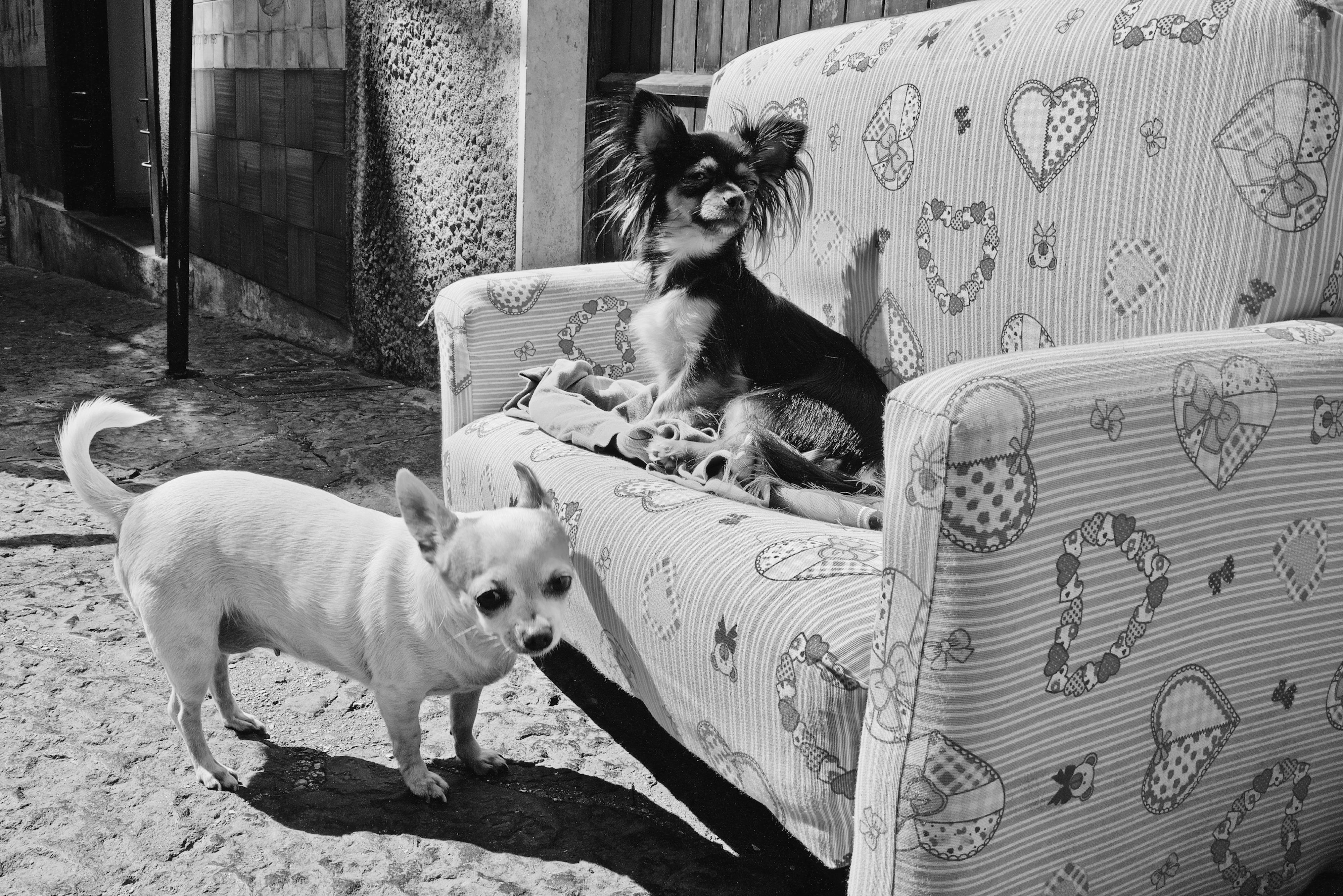 Une vie de chiens