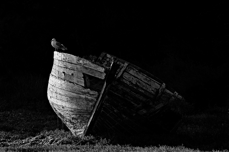 La barque et le goéland