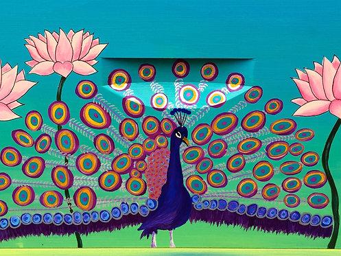 Peacock Blooming