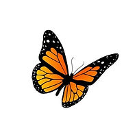 7963721-monarch-butterfly.jpg