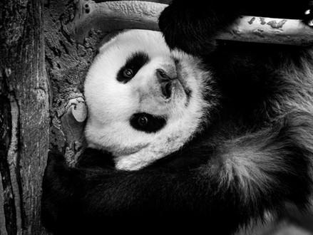 Panda-ing to the Neighbourhood