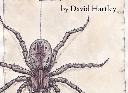 Spiderseed: Spinning the Web