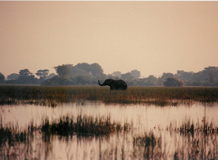 Writing Animals: Shooting an Elephant