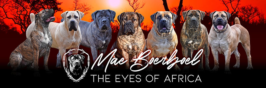 Mae Boerboel Header - New.jpg