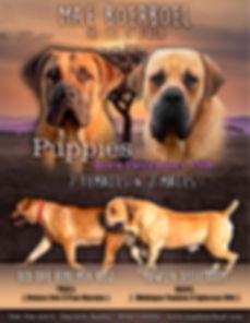 Montana & Disselboom Puppy Poster.jpg