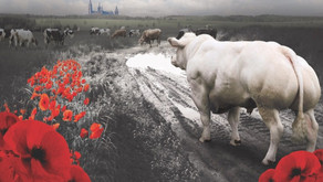 PFCC 4ème Symposium de Buiatrie à Ypres
