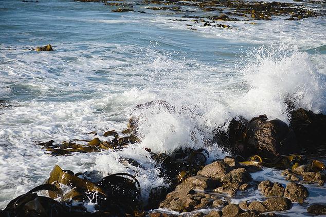 seaweed-71_WEB.jpg