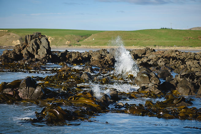 seaweed-73_WEB.jpg