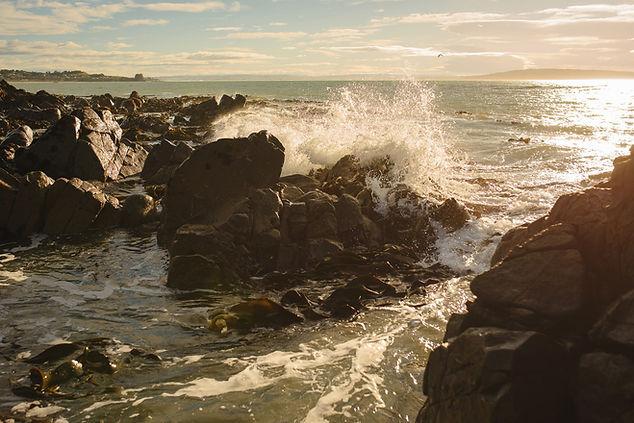 seaweed-59_WEB.jpg