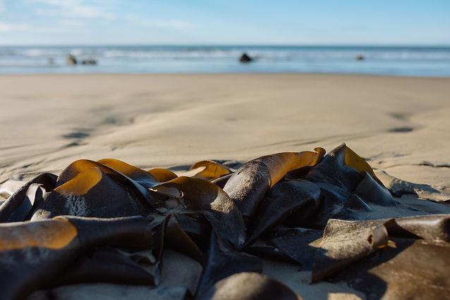 seaweed-41_WEB.jpg