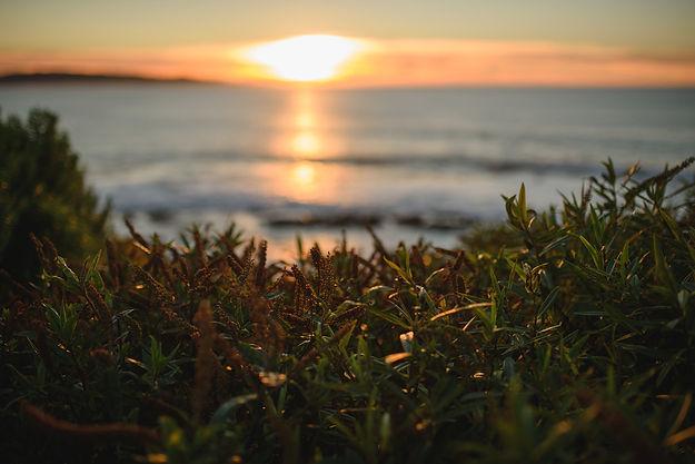 seaweed-32_WEB.jpg