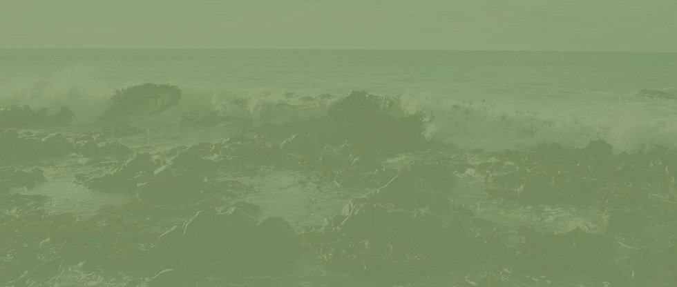 seaweed-57_WEB-(2)_CROP_Green.jpg