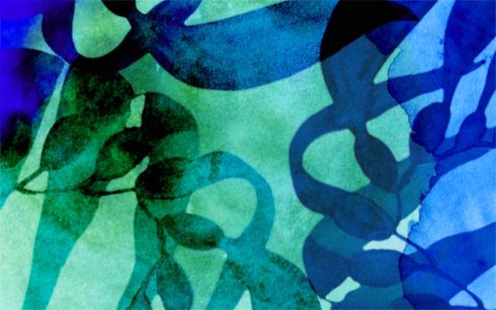 Oceangreen Organics Skincare Illustration