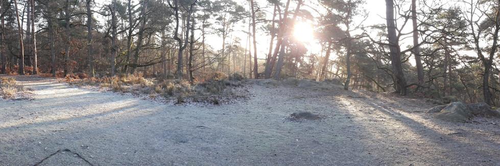 MARCHE NORDIQUE Fontainebleau
