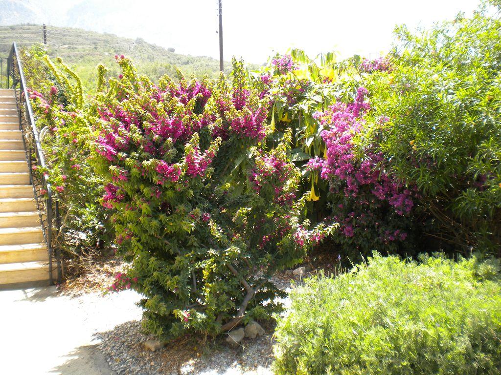 Sunny mature garden