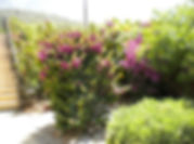 Beautiful gardens Kyrenia villa