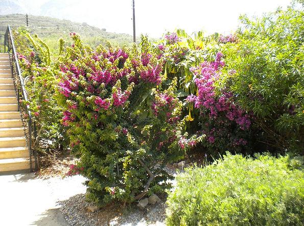 Beautiful gardens Kyrenia villa