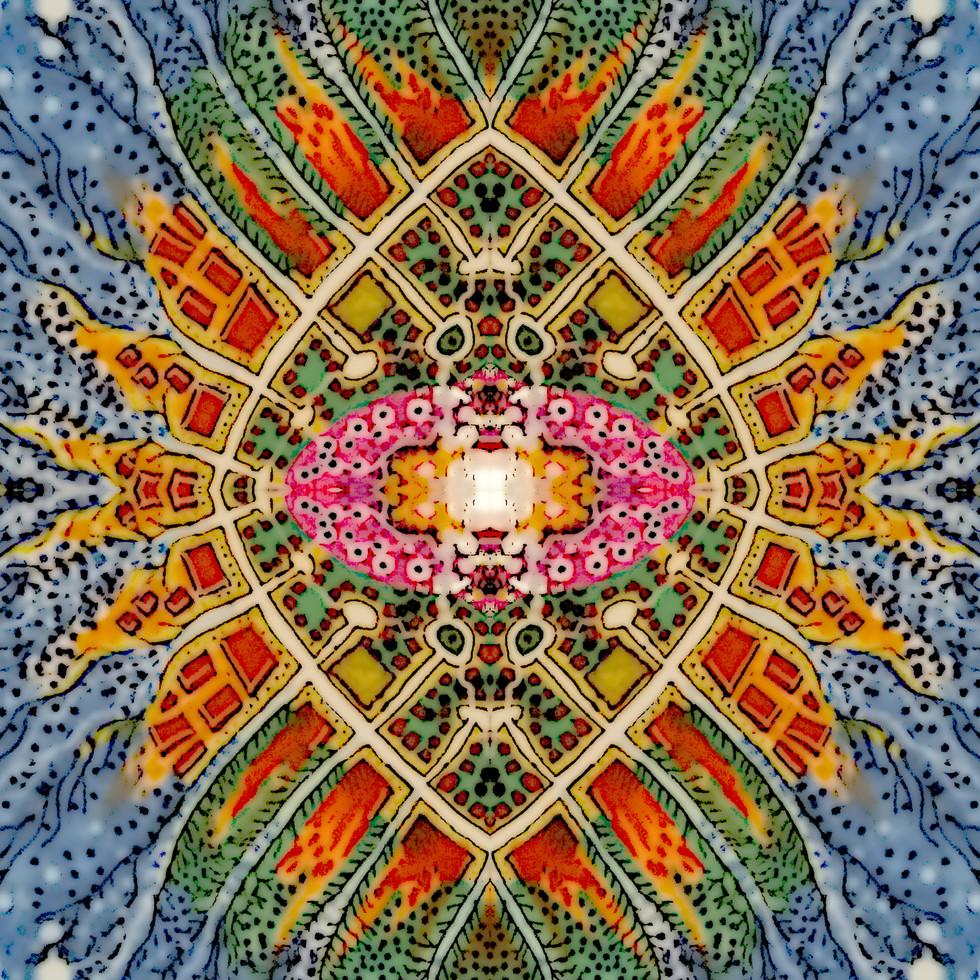 amoebas3.jpg