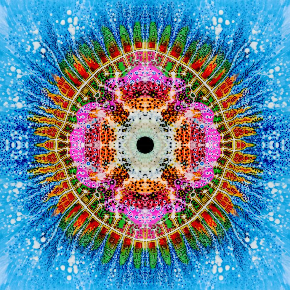 amoebas-blue1x.jpg