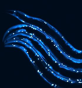 blue cover-art-v4.png