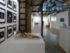 cascione-lusciov-animali-notturni-exhibi