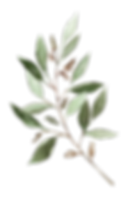 Leaves-12_edited.png