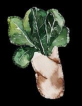 Eco-Food-11.png
