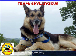 Skylar/Zeus