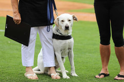 Service dog Rusty