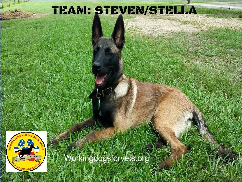 TEAM: STEVEN/STELLA