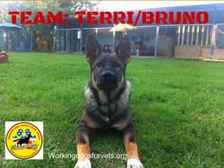 TEAM: TERRI/BRUNO