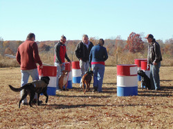 Dog Socialization and training