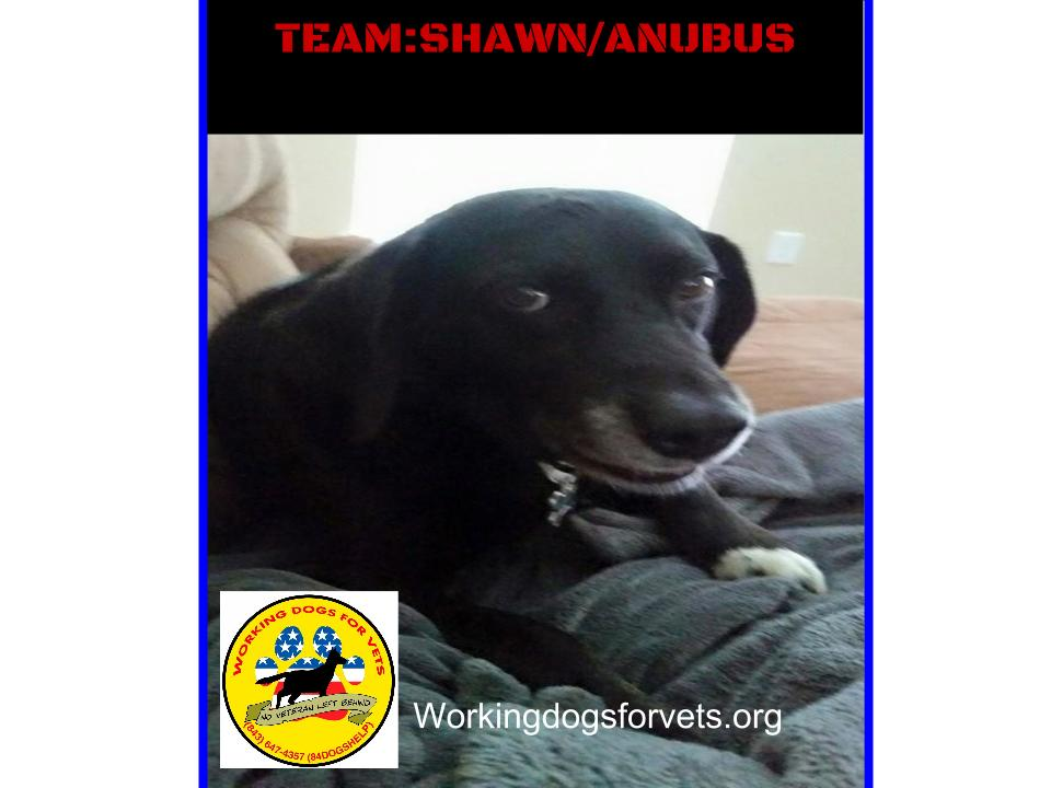 TEAM: SHAWN/ANUBUS