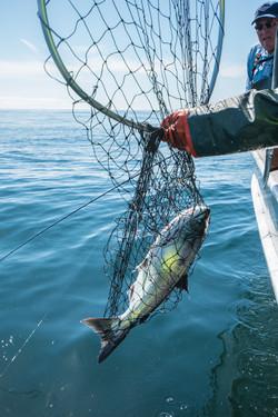 Sitka Fishing Lodges