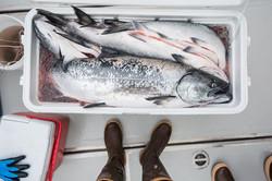 Fishing Charters in Sitka Alaska