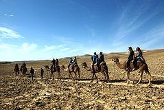camels desert.jpg
