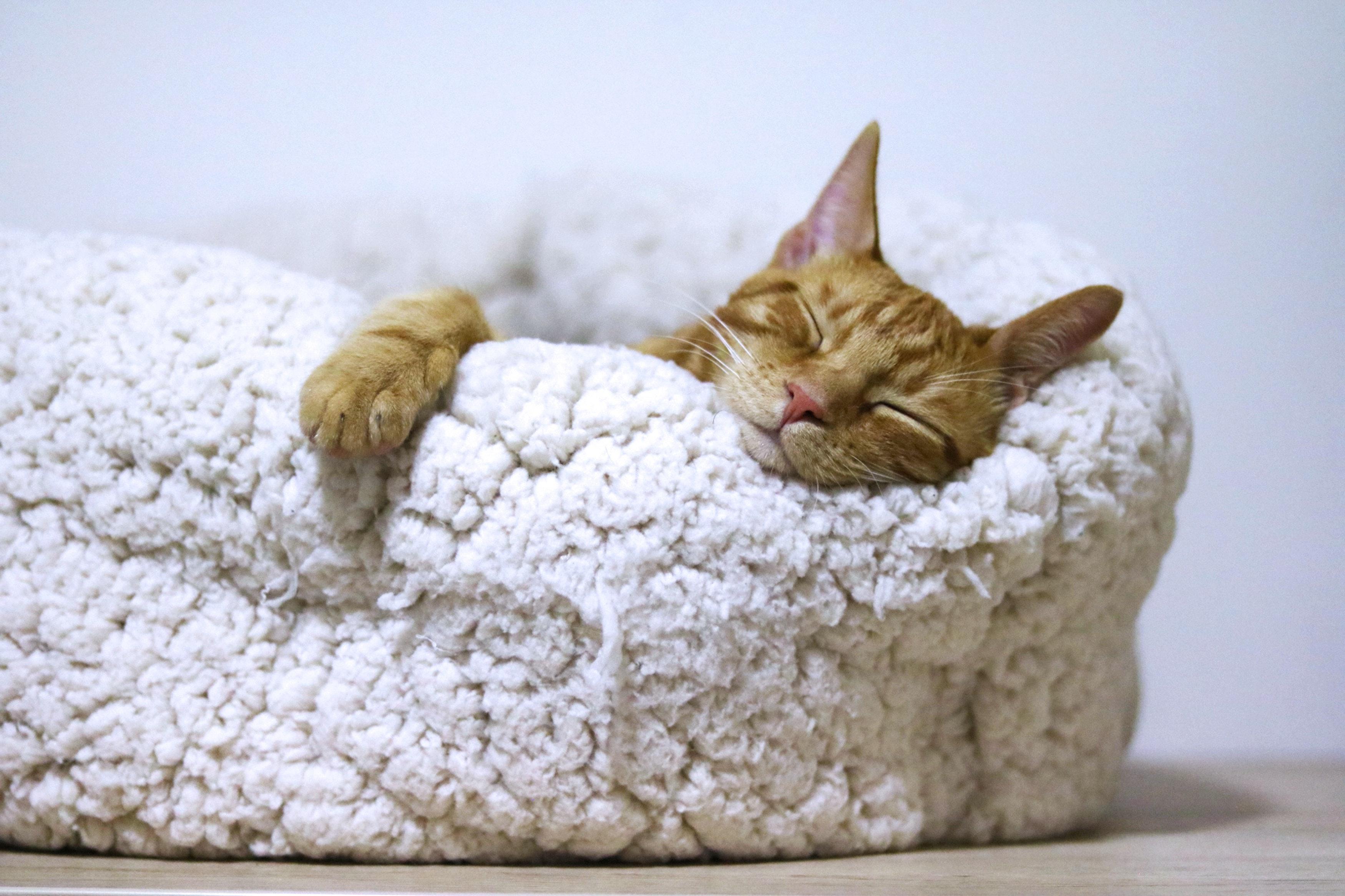 orange-cat-sleeping-on-white-bed-1560424