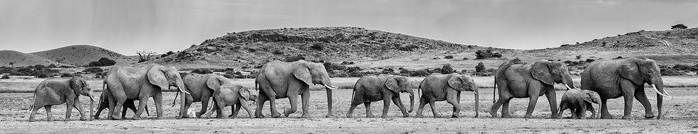 elephant-16_edited.jpg