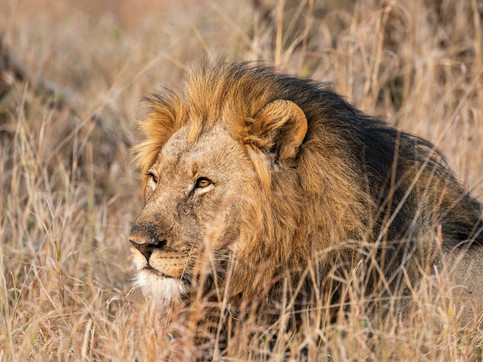 LION18