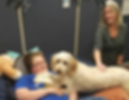 Muppet the F1b Goldendoodle Therapy Dog