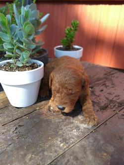 Sybbi's puppy!