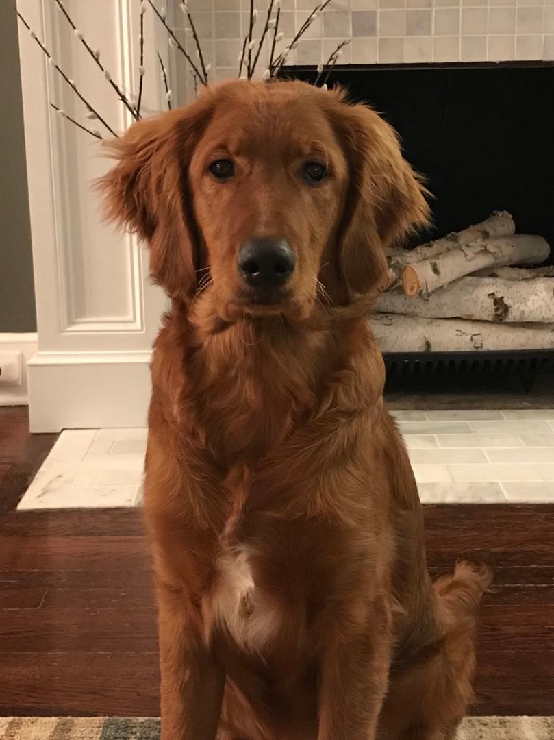 Louie!!