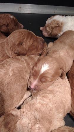 Sibling snuggles!