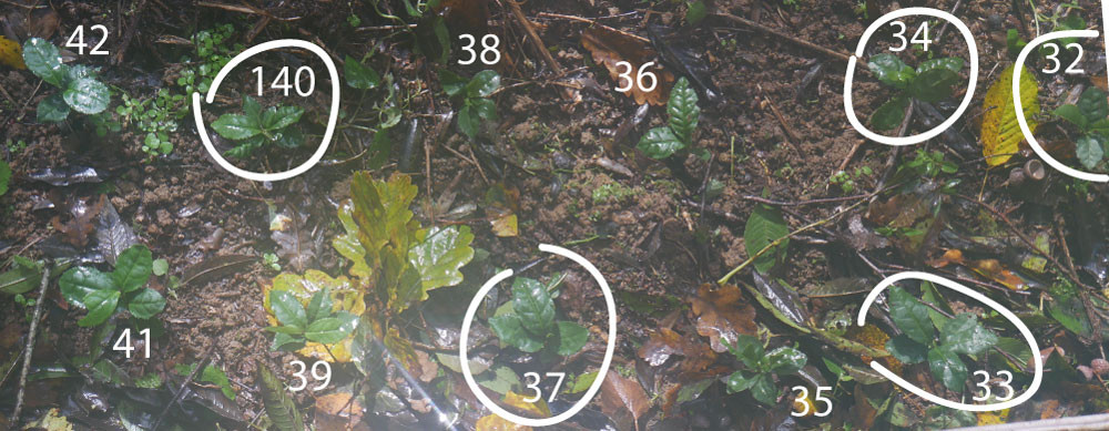 plants-japonais-32-42