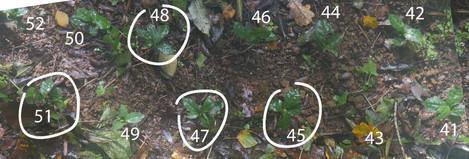 plants-japonais-43-51