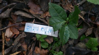 jardin de fondcombe, étiquetage 060 w-02